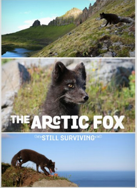 The Arctic Fox